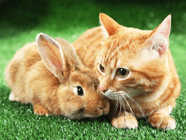 Králik a mačka pod jednou strechou