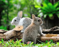 Dva mladé králiky