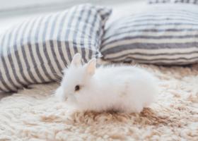 Malý králiček