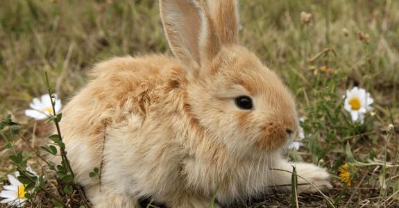 Malý králiček v zelenej tráve